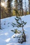 Pouca árvore Foto de Stock Royalty Free