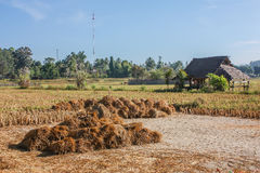 Pouca cabana no campo do arroz Imagem de Stock Royalty Free