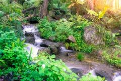 Pouca cachoeira com uma ponte de pedra em uma floresta úmida verde com Imagens de Stock Royalty Free