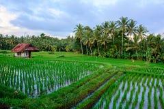 Pouca casa nos campos do arroz de Ubud, Bali, Indonésia Imagem de Stock Royalty Free