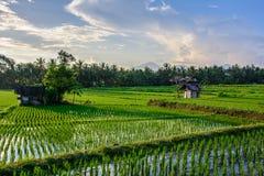 Pouca casa nos campos do arroz de Ubud, Bali, Indonésia imagens de stock