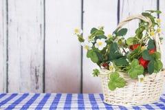 Pouca cesta com morangos decor imagens de stock royalty free