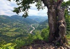 Pouca cidade nas montanhas O rio flui entre montanhas Ajardine com florestas e montanhas do pinho no verão Zakarpattya, Ucrânia Fotos de Stock