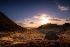 Pouca erva-benta sob a luz do por do sol Fotografia de Stock