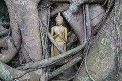 Pouca estátua dourada da Buda dentro das raizes da árvore de banyan no templo budista Imagem de Stock Royalty Free