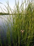 Pouca flor Imagem de Stock