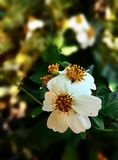 Pouca flor Foto de Stock Royalty Free