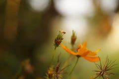 Pouca flor Foto de Stock