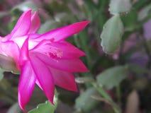Pouca flor Fotografia de Stock Royalty Free