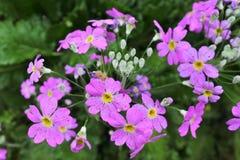 Pouca flor Imagens de Stock