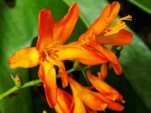 Pouca flor Fotos de Stock Royalty Free