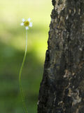Pouca flor branca Fotos de Stock