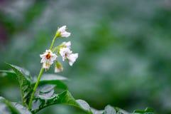 pouca flor branca com borrão verde Foto de Stock Royalty Free