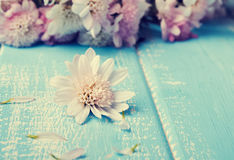 Pouca flor branca no azul coloriu o fundo de madeira Foto de Stock