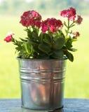 Pouca flor cor-de-rosa imagens de stock royalty free