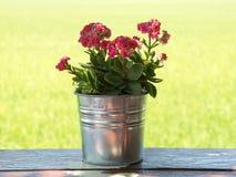 Pouca flor cor-de-rosa imagem de stock