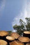 Pouca madeira Imagem de Stock