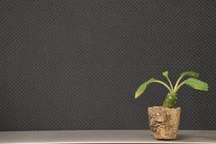 Pouca planta Fotos de Stock