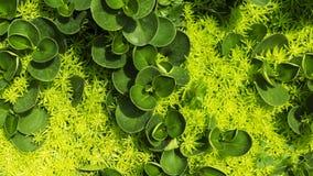 Pouca planta no jardim Fotos de Stock