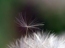 Pouca semente que tenta quebrar livre. Fotografia de Stock Royalty Free