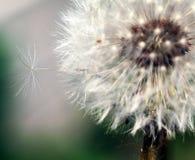 Pouca semente que tenta quebrar livre. Foto de Stock