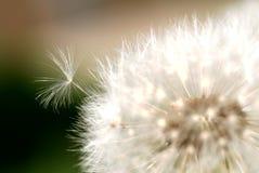 Pouca semente que tenta quebrar livre. Foto de Stock Royalty Free