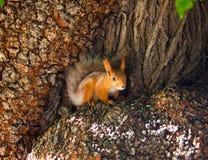 Pouca senhora da floresta Imagens de Stock Royalty Free