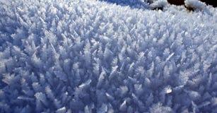 Poucas árvores de Natal de cristal da neve Imagem de Stock Royalty Free