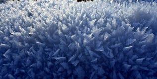Poucas árvores de Natal de cristal da neve Foto de Stock Royalty Free