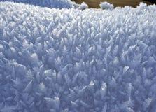 Poucas árvores de Natal de cristal da neve Fotografia de Stock Royalty Free