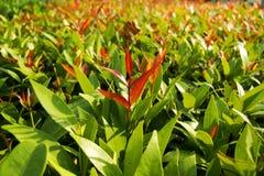 Poucas folhas da árvore Imagens de Stock Royalty Free