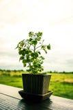 Poucas folhas da árvore Imagem de Stock Royalty Free