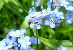 Poucas mosca e flor Imagem de Stock Royalty Free