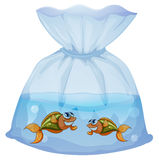 A pouch with fishes Royalty Free Stock Image