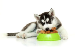 Pouco alimento comer Fotos de Stock Royalty Free