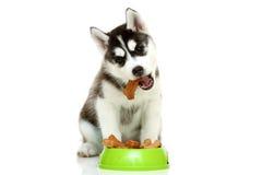 Pouco alimento comer Imagens de Stock