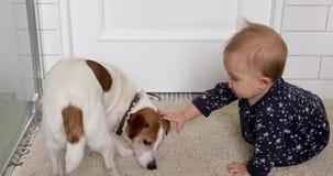 Pouco bebê e cão Jack Russell Terrier em um tapete branco video estoque