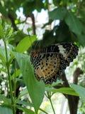 Pouco borboleta modelada em uma folha foto de stock