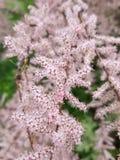 Pouco branco com flores vermelhas imagem de stock royalty free