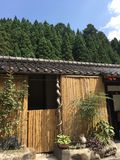 Pouco cabana e pinheiros de bambu floresta, Kyoto no verão fotos de stock