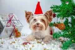 Pouco cachorrinho comemora o ano novo fotos de stock