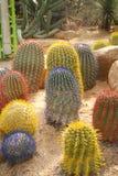 Pouco cacto colorido na areia no parque do nongnuch, Pattaya, Tailândia Fotografia de Stock Royalty Free