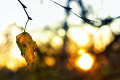 É pouco calor do sol do inverno Foto de Stock Royalty Free