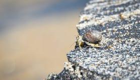 Pouco caranguejo leva seu escudo na areia quente ao longo da água litoral imagens de stock royalty free
