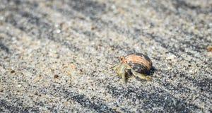 Pouco caranguejo leva seu escudo na areia quente ao longo da água litoral fotografia de stock royalty free