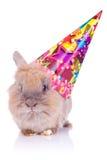 Pouco coelho bonito do aniversário imagens de stock royalty free