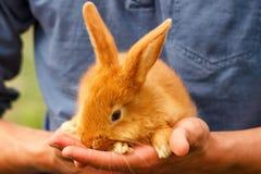 Pouco coelho bonito que senta-se em suas mãos imagem de stock