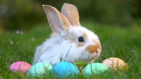 Pouco coelho que senta-se na grama perto dos ovos da páscoa, símbolo festivo