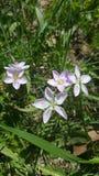 Pouco divertimento bonito do verão da flor Imagem de Stock