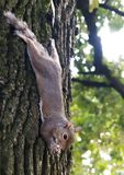 Pouco esquilo que joga no parque imagens de stock